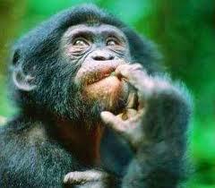 Macaco em dúvida